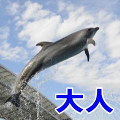 名古屋港水族館 大人