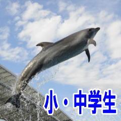 名古屋港水族館 小中学生